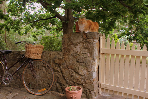 Guests Bike and Bill our Cat