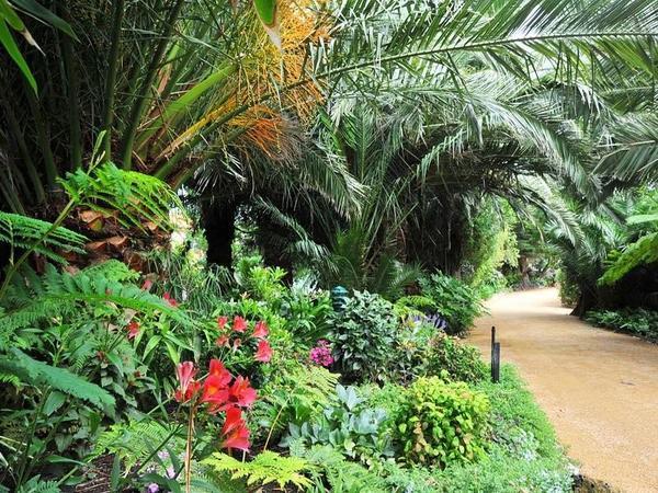 Seacove garden