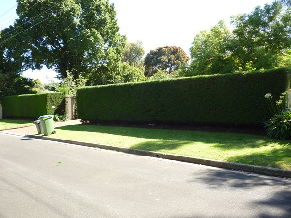 Beautiful Hedges