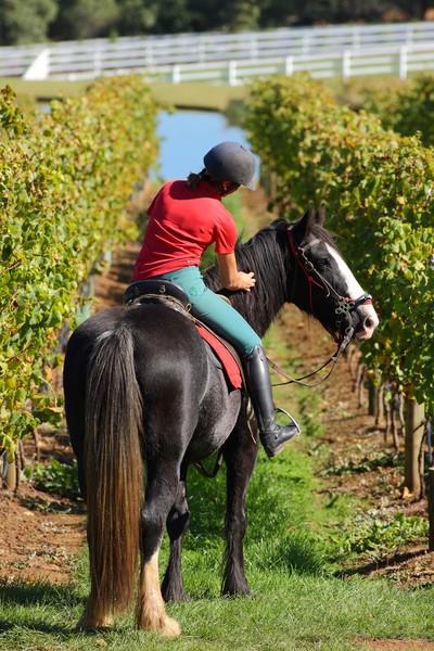 Horseback Winery Tours